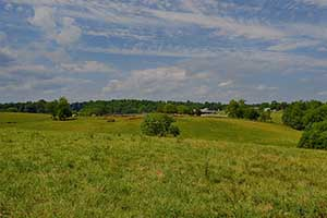 Cattle farm for sale in Virginia