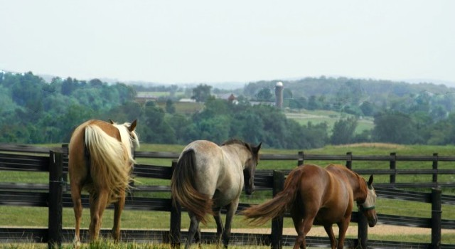 Charlottesville Horse Farms for Sale