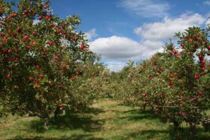 Buying an Apple Orchard