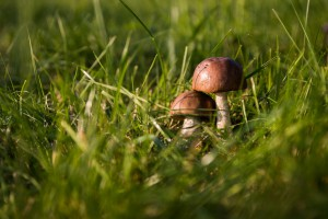 mushrooms-autumn-forest-the-collection-of-50672