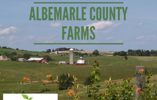 Albemarle Farms - Real Estate Market Update - Dec. 2018