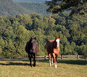 Horse Farms in Virgnia for Sale